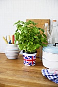 Fresh basil in a pot in the kitchen