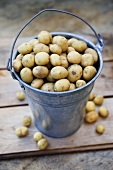 Freshly harvested potatoes in a bucket