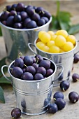 Mirabelles and damsons in zinc buckets