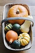 Various pumpkins in a basket