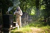 Imker bei der Arbeit an Bienenstöcken