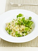 Risotto with broad beans
