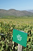 A vineyard and sign denoting the grape variety Shiraz in Orange Grove near Robertson in the Western Cape province of South Africa