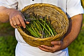 Cook holding a basket with asparagus (Saundersfoot, Pembrokeshire, Wales)