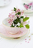 Pink colored white thorn blossoms in a pink tea cup