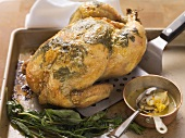 Fried herb chicken filled with fennel