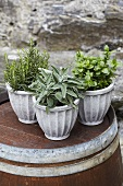 Rosemary, mint and sage in flowerpots
