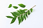A sprig of curry leaves