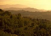 A hilly landscape near Dobrovo, Slovenia