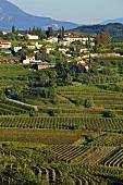 Weinlandschaft bei Dobrovo mit dem Dorf Brda, Slowenien