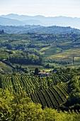 Weinlandschaft bei Dobrovo, Slowenien