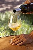 Wine from the Kabaj & Morel vineyard, Dobrovo, Slovenia