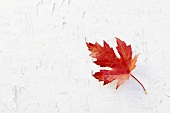 An autumnal vine leaf
