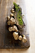Dried true puffballs on a wooden board