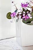 Violets (cyclamen coum) in a white ceramic vase