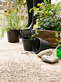 Herbs and vegetables in flowerpots