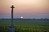 Sunrise over the Montrachet vineyard, Burgundy, France