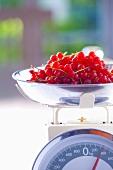 Rote Johannisbeeren auf Küchenwaage