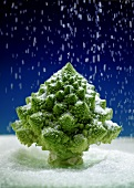Romanesco broccoli in Christmas tree shape sprinkled with sugar (food landscape)