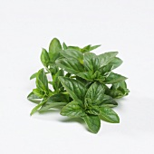 Mint 'Pennyroyal' (Mentha pulegium)