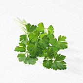 Flat leafed parsley (Petroselinum sativum)