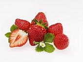 Erdbeeren mit Blatt und Blüte