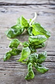 Fresh basil with water drops on a wood background