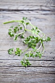 Fresh chervil on wooden background