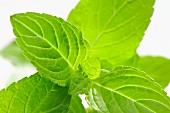 Mint leafs (close-up)