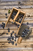 Blueberries on a comb and in a shovel