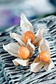 Three ground cherries (Physalis) on a basket
