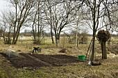 Early beets in a vegetable garden, wheel barrow and garden tools