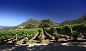 Cape Point Winery with Chapman's Bay and Chapman's Peak, Noordhoek, Western Cape, SA