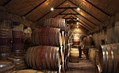 Wine barrels in the cellar (Vondeling, Paarl, Western Cape, SA)