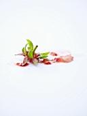 Stiel mit Blättern einer Erdbeere