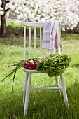 A lettuce, radishes, spring onions and a tea towel on a wooden chair in a garden