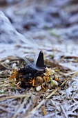 Incense being burnt outside in the the winter; a scented ylang ylang cone, frankincense and marigold