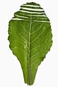 Couve (Brazilian cabbage)