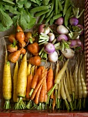 An arrangement of various types of carrots, turnips and peas