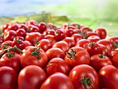 Many Red Tomatoes on White Background