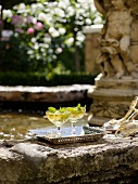 Aperitifs with mint by a romantic garden fountain