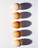 A row of five brown eggs (seen from above)