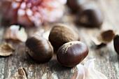 Chestnuts and a pompom dahlia