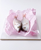 Two bream on a piece of paper