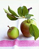 Gala apples with leave