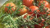 Frying tomatoes, garlic and herbs in oil
