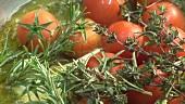 Tomaten, Knoblauch und Kräuter in heißem Öl frittieren