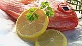 Alfonsino with lemon slices and herbs