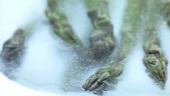 Gefrorener grüner Spargel