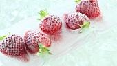 Gefrorene Erdbeeren auf Eis